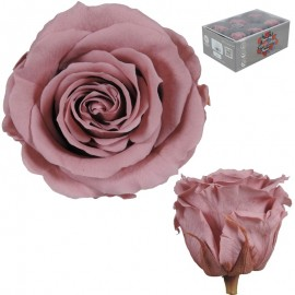 Rosa Estandar Ø 6 cm Cherry...