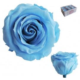 Rosa Estandar Celeste (x6 ud)