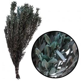 Pubescens ↕30-50 cm Verde Salvia