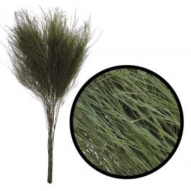 Arbol Helecho ↕ 60 cm Verde
