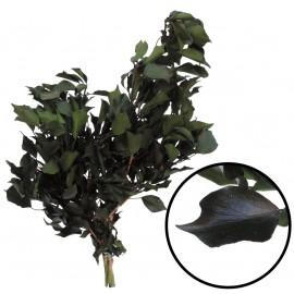 Hiedra Hedera ↕ 30-60 cm Verde