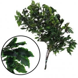 Pittosporum ↕ 30-40 cm Verde