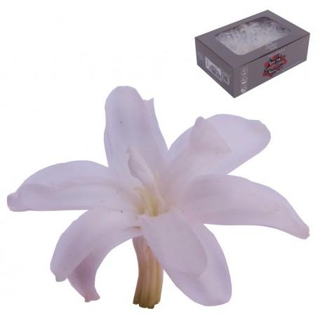 Nardo Blanco Ø 6cm (12 uds)
