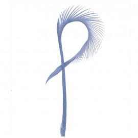 Pluma de Oca Celeste ( 10 uds )