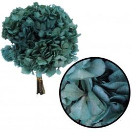Hortensia Verde Agua Ø 20 cm