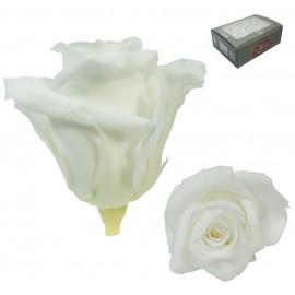 Mini Rosa Ø 3,5 cm Blanco (12 uds)