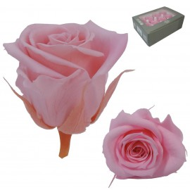 Mini Rosa Ø 3,5 cm Rosa (12 uds)