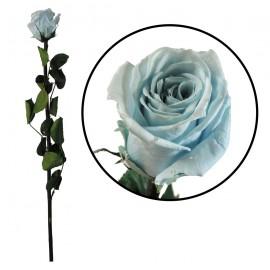 Rosa Amorosa Celeste ↕ 55 cm