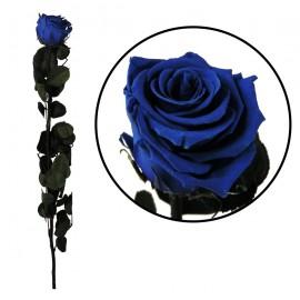 Rosa Amorosa Azul ↕ 55 cm