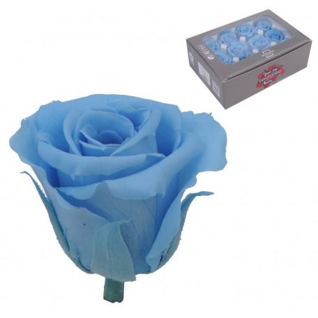 Mini Rosa Ø 3,5 cm Celeste (12 uds)