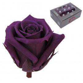 Mini Rosa Ø 3,5 cm Morada (12 uds)