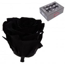 Mini Rosa Ø 3,5 cm Negra (12 uds)