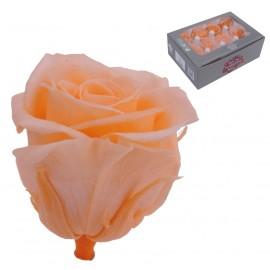 Mini Rosa Ø 3,5 cm Melocoton (12 uds)