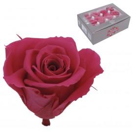 Mini Rosa Ø 3,5 cm Rosa Oscuro (12 uds)