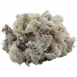 Musgo Filandes Natural 500 gr
