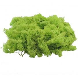 Musgo Filandes Verde Manzana 500 gr