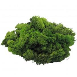 Musgo Filandes Verde Oscuro 500 gr