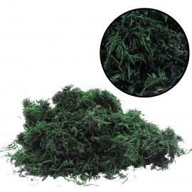Musgo Belen Plano Verde Oscuro 1000gr