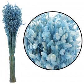 Briza Maxima Azul 85 grs