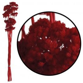 Achillea Filipendulina Rojo 100 grs