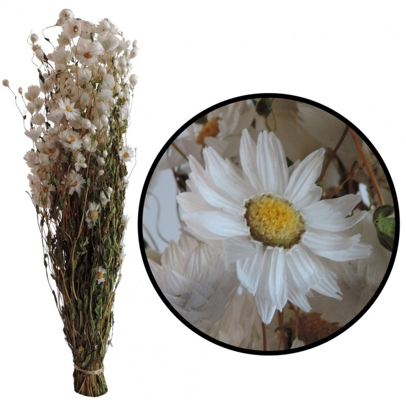 Acroclinium Blanco 100 grs