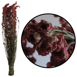 Delphinium Rosa 100 grs