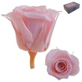 Mini Rosa Ø 3,5 cm Rosa Vintage (12 uds)