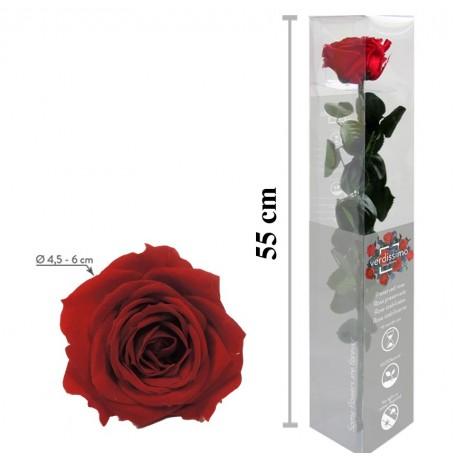 Rosa Amorosa Roja Caja ↕ 55 cm