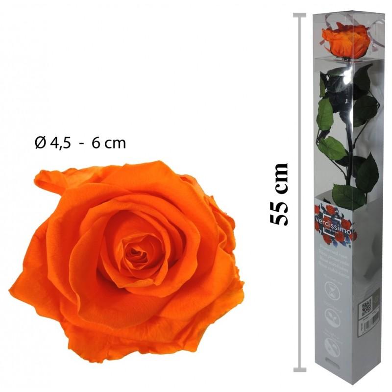 Rosa Amorosa Naranja Caja ↕ 55 cm
