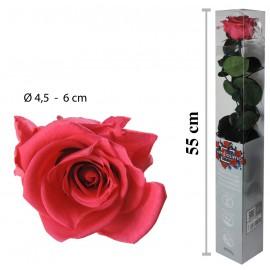 Rosa Amorosa Rosa Oscuro Caja ↕ 55 cm