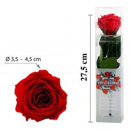 Rosa con Tallo Mini Roja ↕27,5 cm