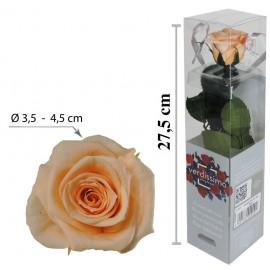 Rosa con Tallo Mini Melocoton ↕27,5 cm