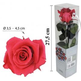 Rosa con Tallo Mini Rosa Oscuro ↕27,5 cm