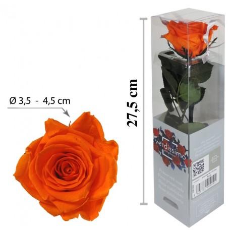 Rosa con Tallo Mini Naranja ↕27,5 cm