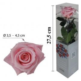 Rosa con Tallo Mini Rosa Pastel ↕27,5 cm