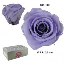 Mini Rosa Ø 3,5 cm Lila (12 uds)