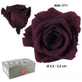 Mini Rosa Ø 3,5 cm Byzantium (12 uds)