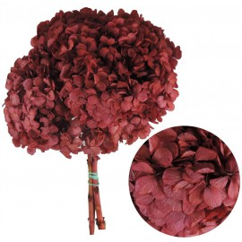 Hortensia Rojo Fuerte Ø 20 cm Pres.