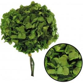 Hortensia Verde Reja Ø 20 cm Pres.