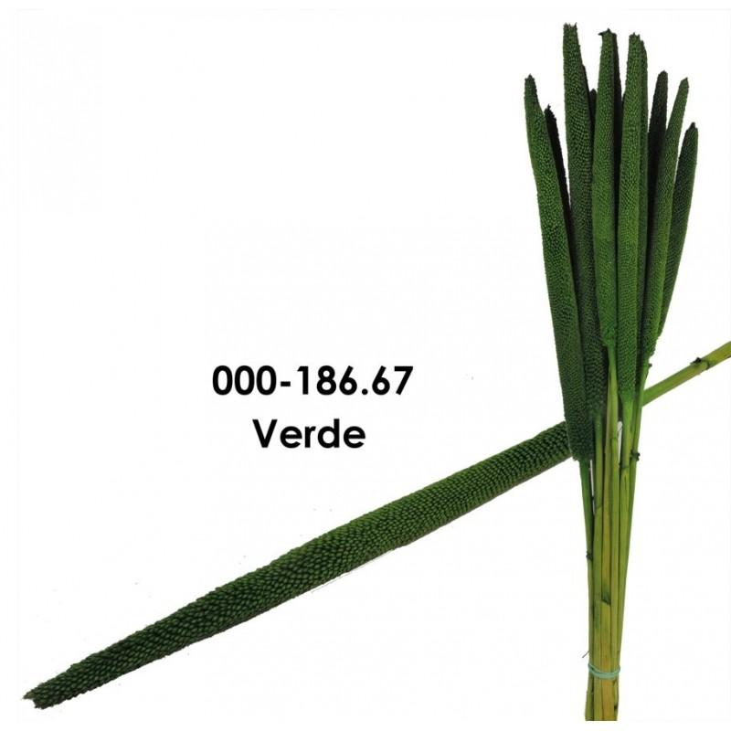 Babala Verde 75cm
