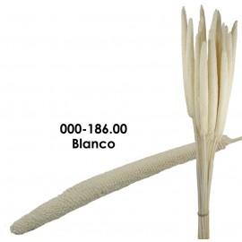 Babala Blanco 75cm