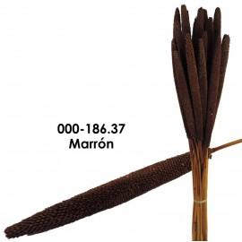 Babala Marron 75cm
