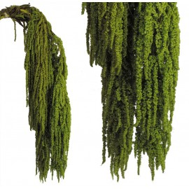Amarantus Pres. ↕ 70 cm Verde Claro