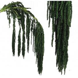 Amarantus Pres. ↕ 70 cm Verde Reja