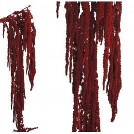 Amarantus Pres. ↕ 70 cm Rojo