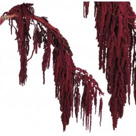 Amarantus Pres. ↕ 70 cm Fucsia