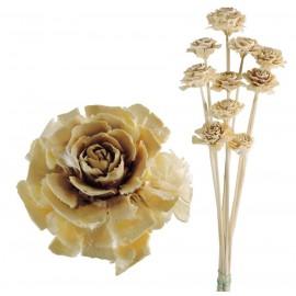 Cedar Rose Blanca (10ud)