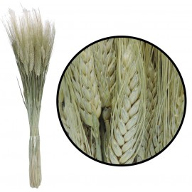 Triticum Natural Verdoso 200 gr
