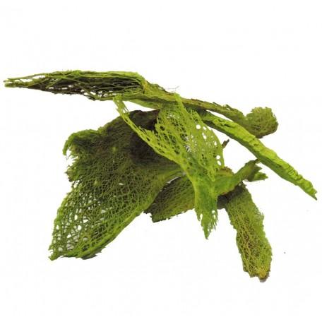 Agave Transparente Verde 200 gr