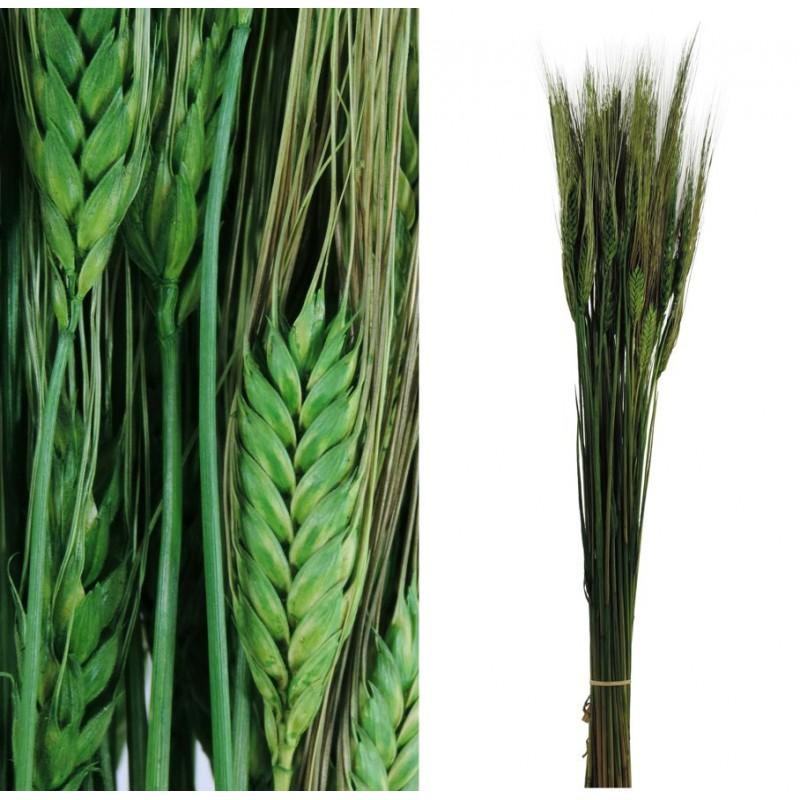 Trigo Verde 100 gr